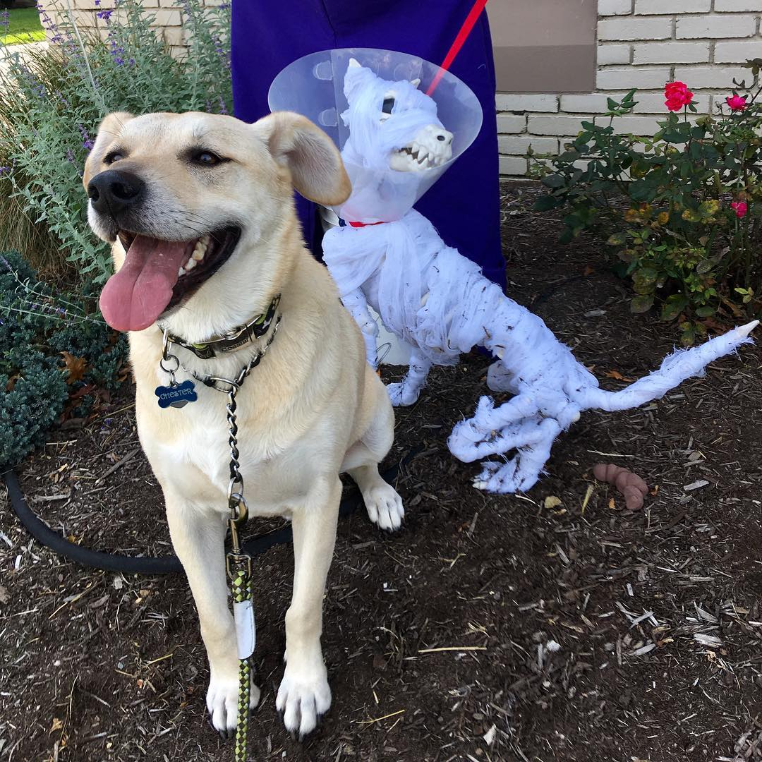 Chester poses with scarecrow dog at Lakewood Animal Hospital onhellip